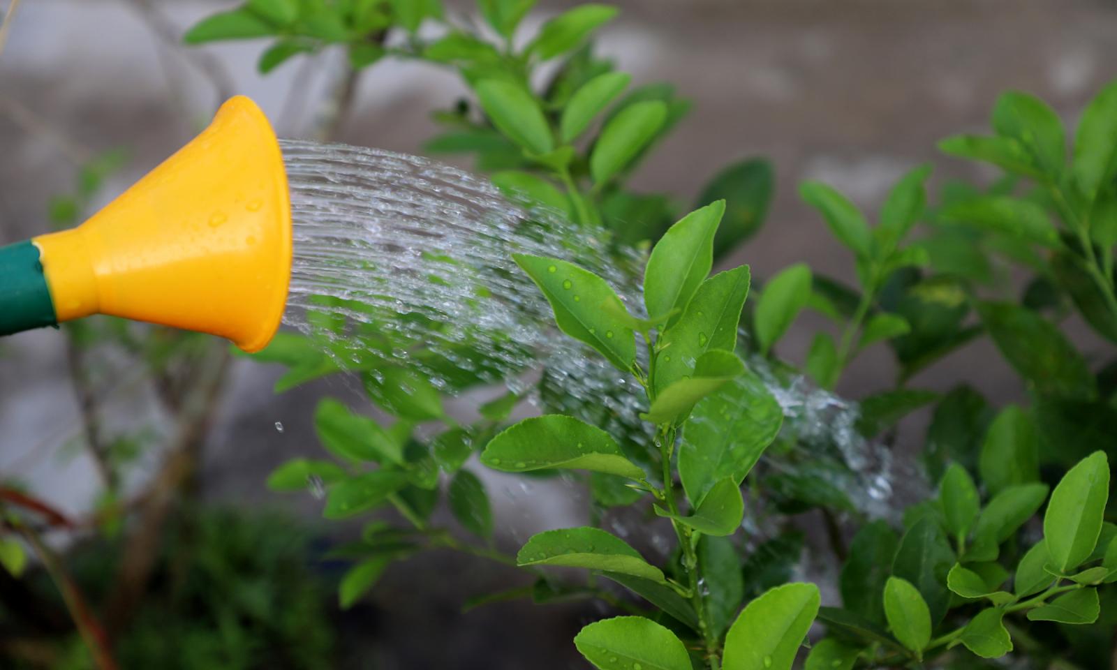 Watering Plants Colorado Springs